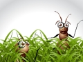 Ants_in_Grass