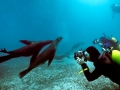Divers_Galapagos_Sea_Lions