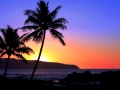 Palm_Trees_Sunset_1