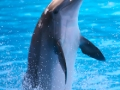 Dolphin_Image_1