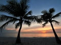 Palm_Trees_Sunset_3