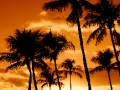 Palm_Trees_Sunset_2